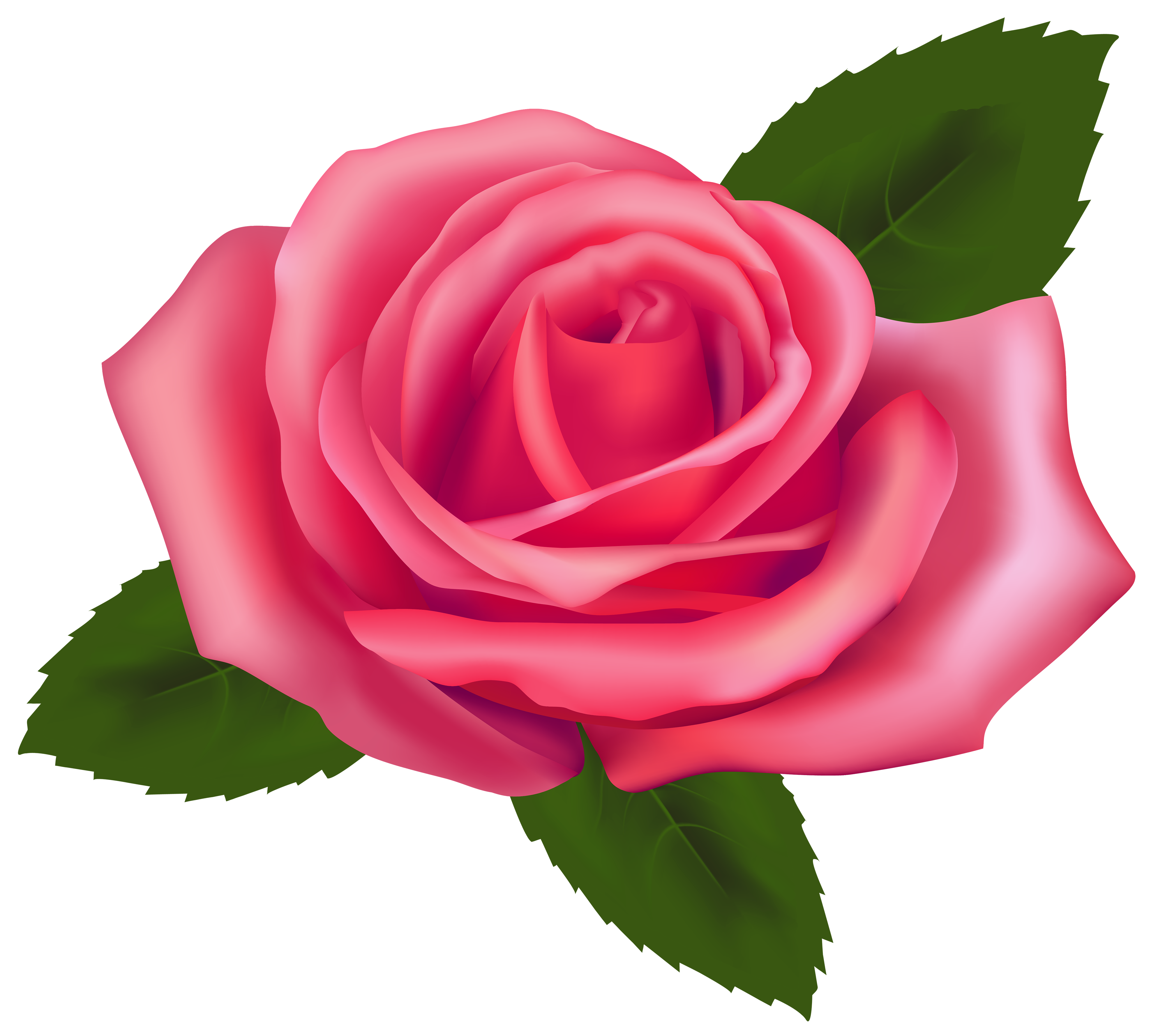 - Rose Clipart