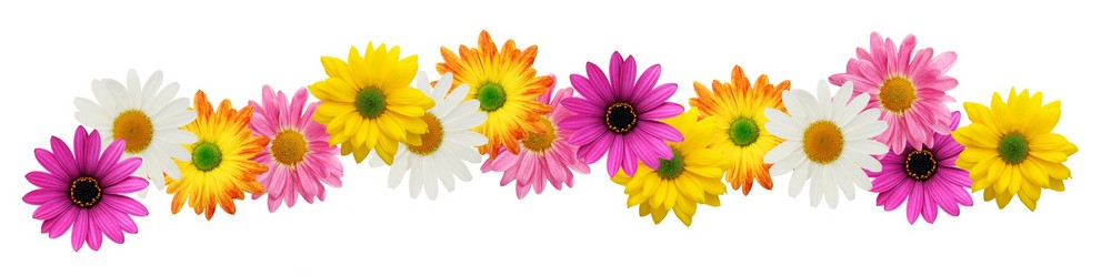 10 Spring Flowers Border Free Cliparts That You Can Download To You