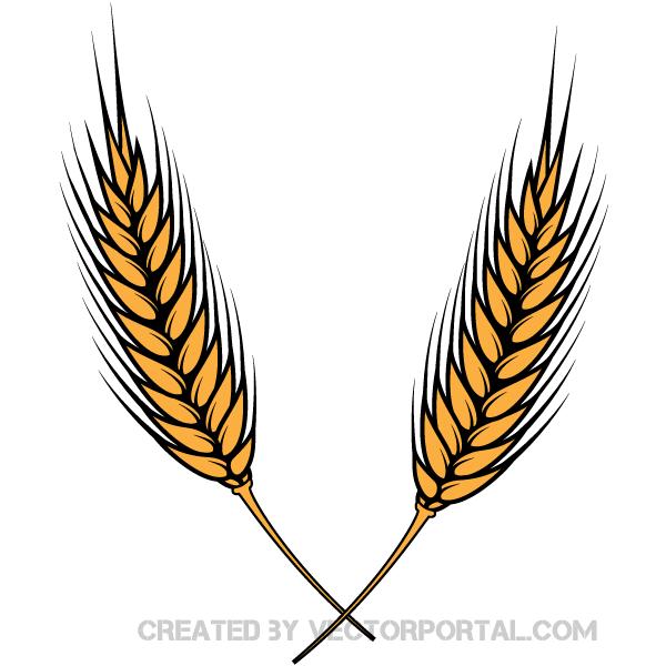 10  Wheat Clipart Images Vectors   Download Free Vector Art u0026amp; Graphics   123Freevectors