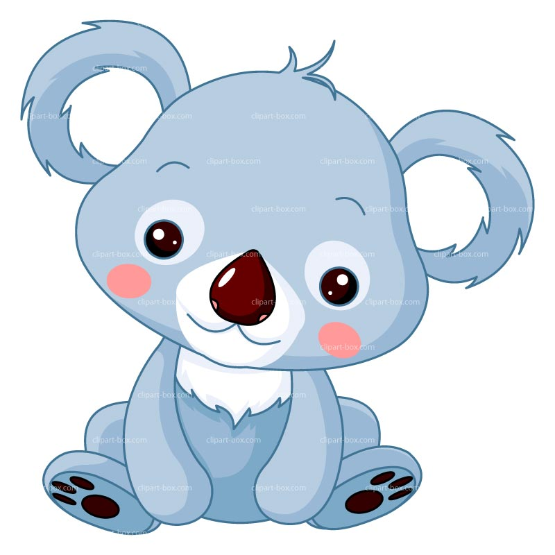 1000  images about koalas on .