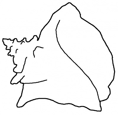 13 Conch Shell Clip Art Free Cliparts That You Can Download To You