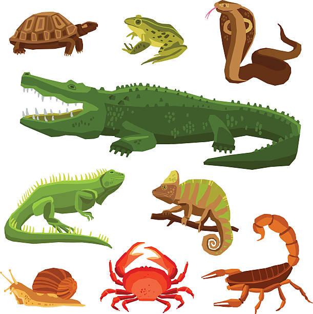 Amphibian clipart animal adaptation #14