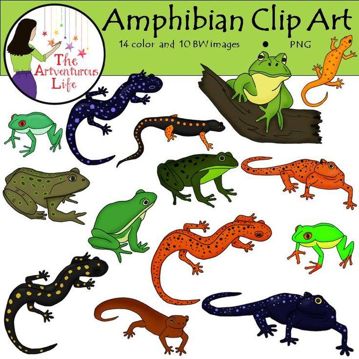 Amphibians clipart - Amphibian Clipart