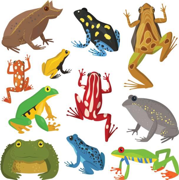 Frog cartoon tropical animal cartoon amphibian vector illustration vector  art illustration