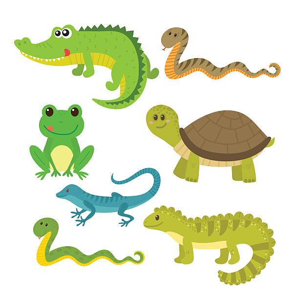 Set of creeping things. Wild  - Amphibian Clipart