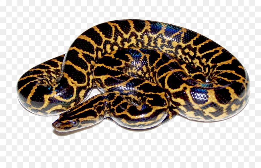 Snake Display resolution Green anaconda Clip art - anaconda
