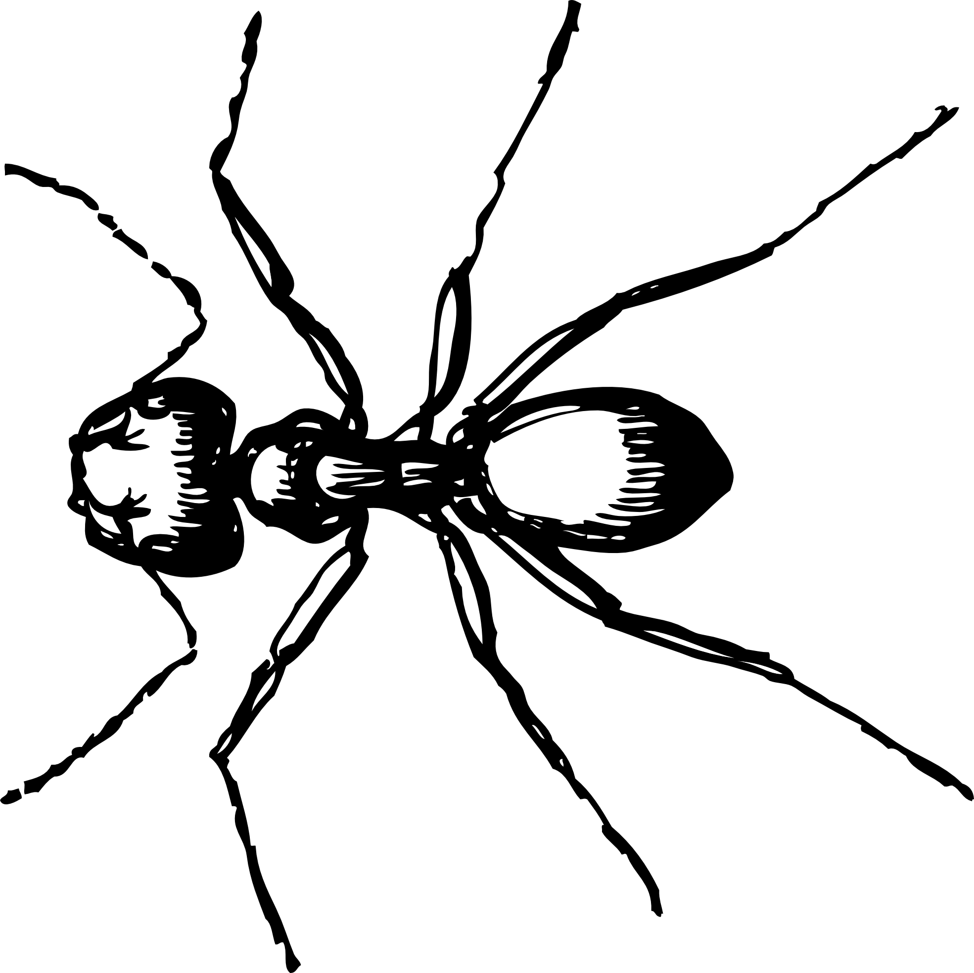 Ant clipart black and white: carpenter ant black white