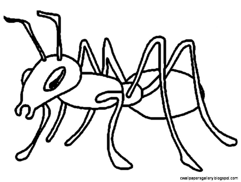View Original Size. Ants Clipart Black And White ClipArt Best