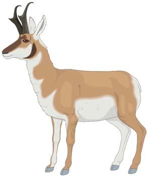 Antelope; Antelope Vector 1