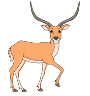 Antelope Clipart Size: 72 Kb