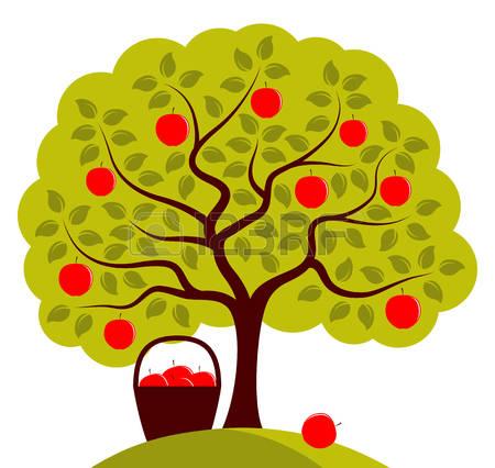 apple tree: vector apple tree .