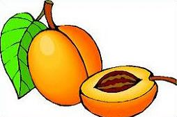 Apricot Clipart #4