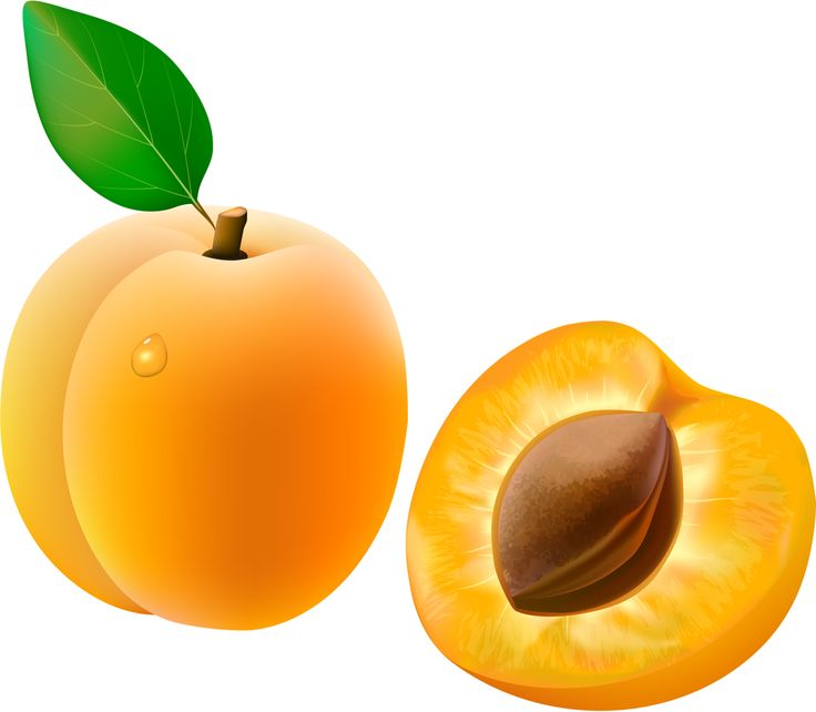 Apricot clipart fruit #10