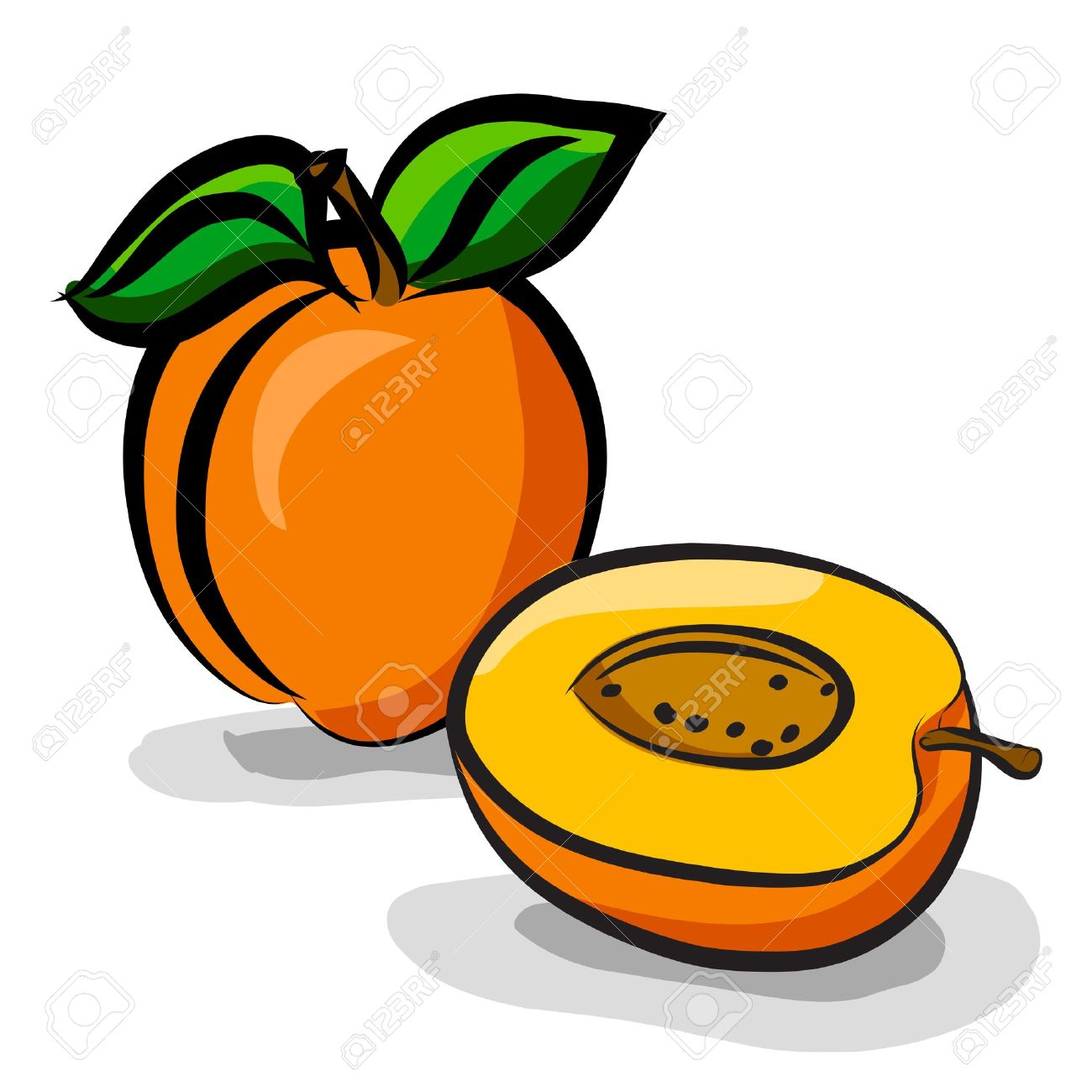 Apricot fruits sketch drawing - Apricot Clipart