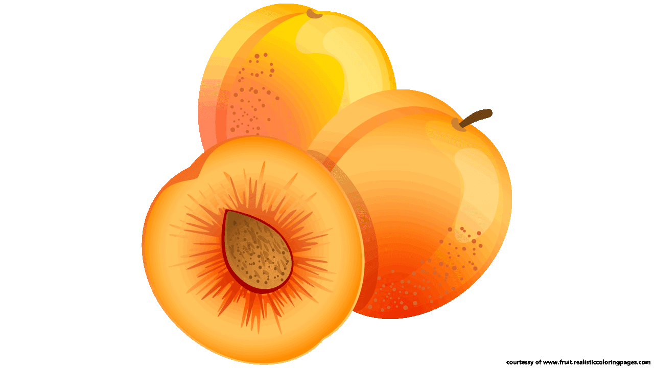 apricot illustrations hdclipartall.com