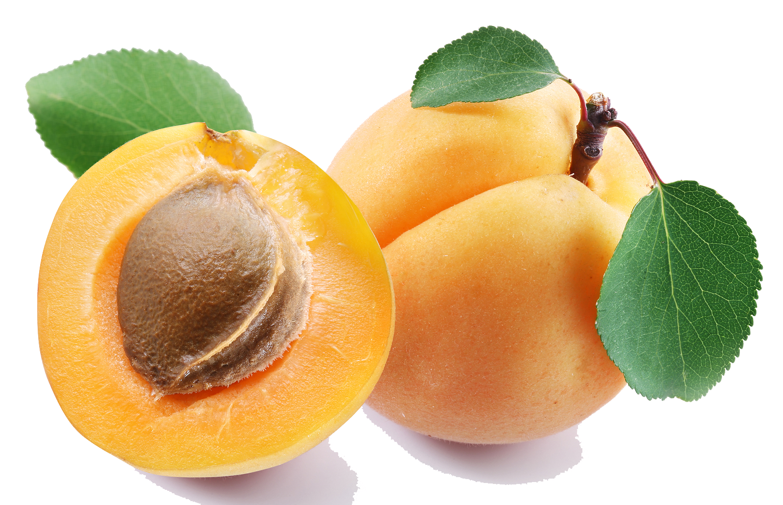 Apricot PNG Clipart.