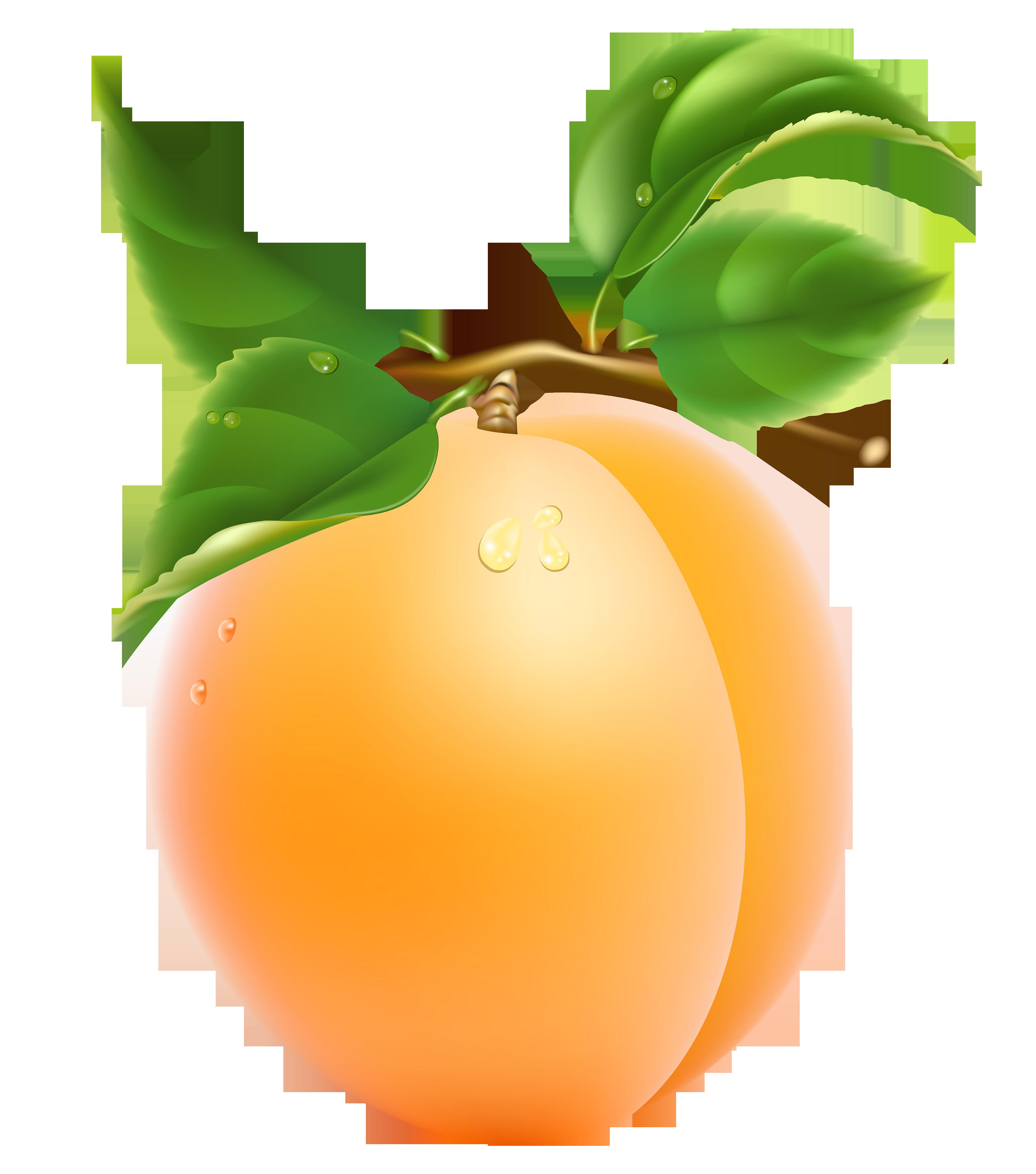 Apricot Transparent Clipart #1