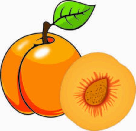Apricot vector design Stock Photo