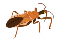 Assassin bug insect clipart. Size: 61 Kb
