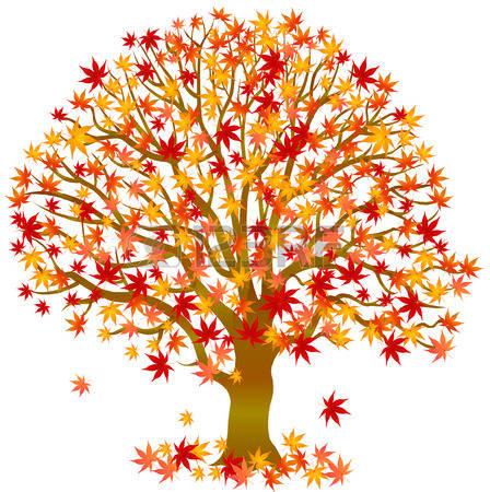 autumn tree: Autumn leaves maple tree
