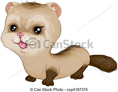 ... Baby Ferret with Clipping Path