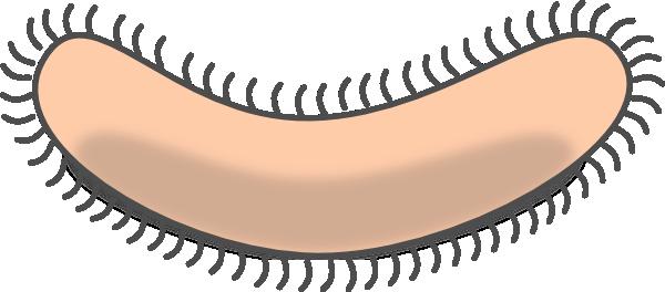 Bacteria Clipart