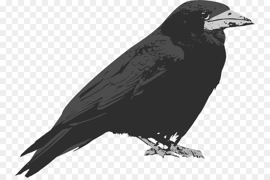 Common raven Baltimore Ravens Clip art - raven