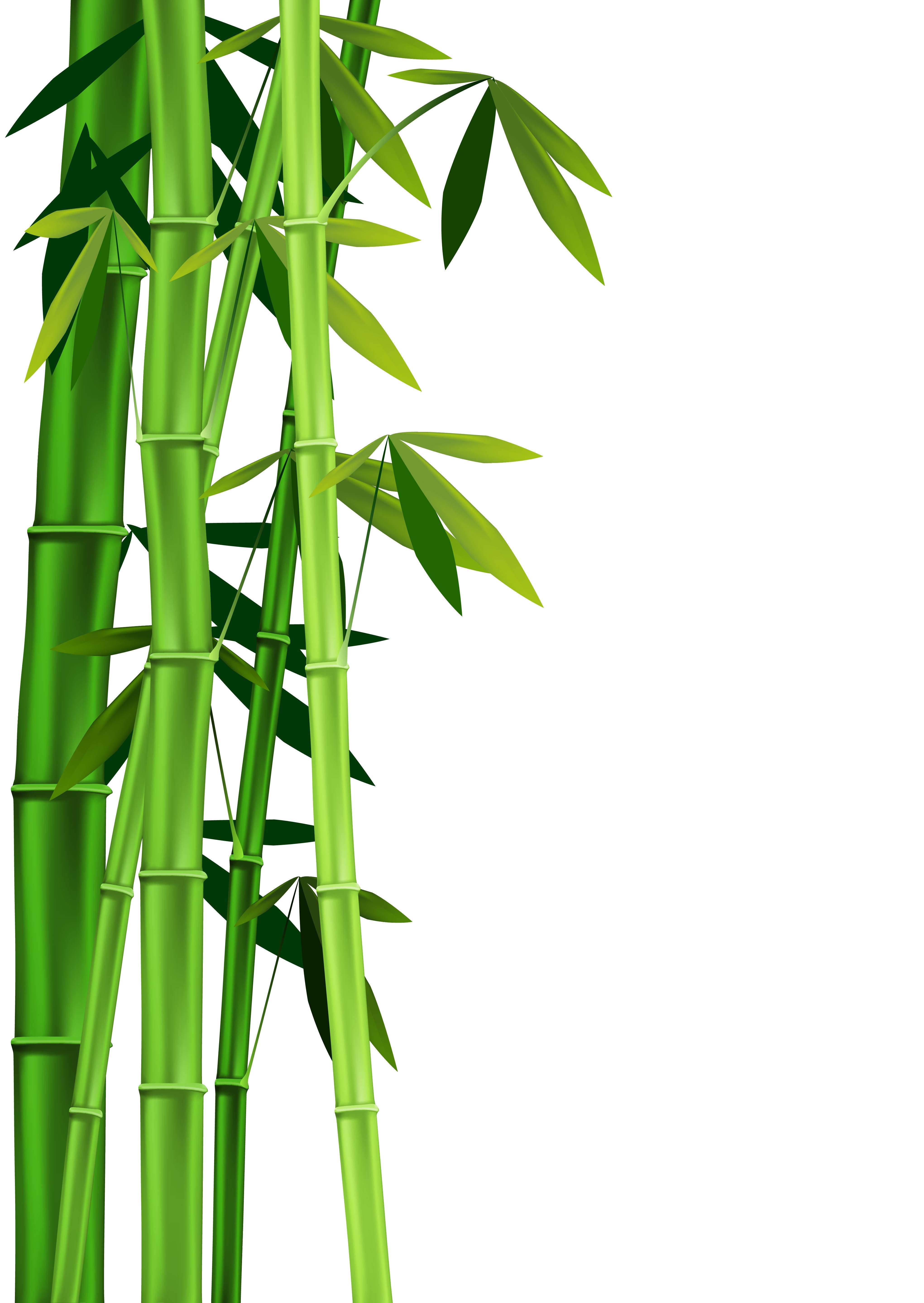 ... Bamboo Clipart - clipartall ...
