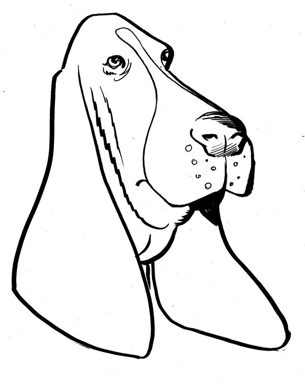 lots of Basset Hound Clipart (clipart panda)