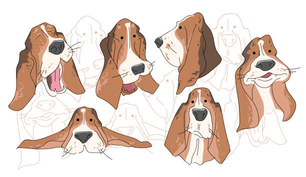 Vector illustration funny dog thoroughbred on a white background vector art  illustration