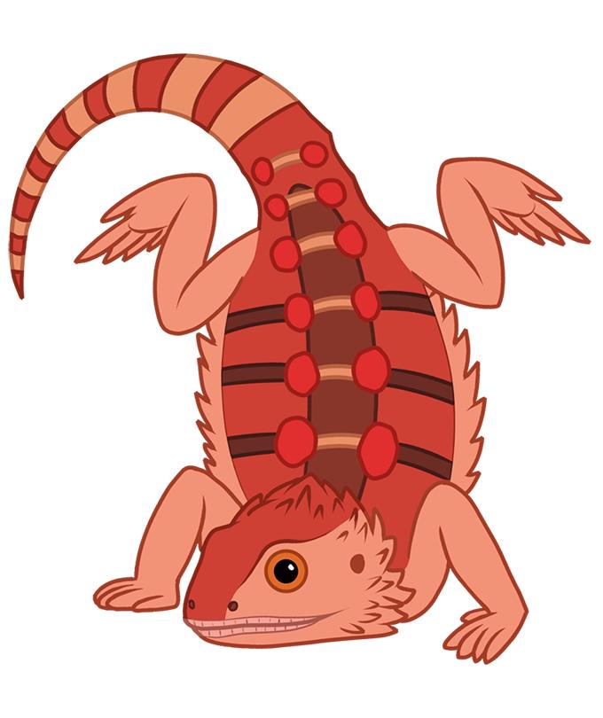 Bearded dragon clip art set, reptile illustration, lizard clipart graphic # beardeddragon #bearded #dragon #clipart #illustration