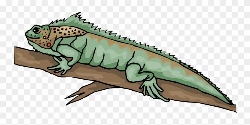 Bearded Dragon Clipart - Bearded Dragon Lizard Clipart #311499