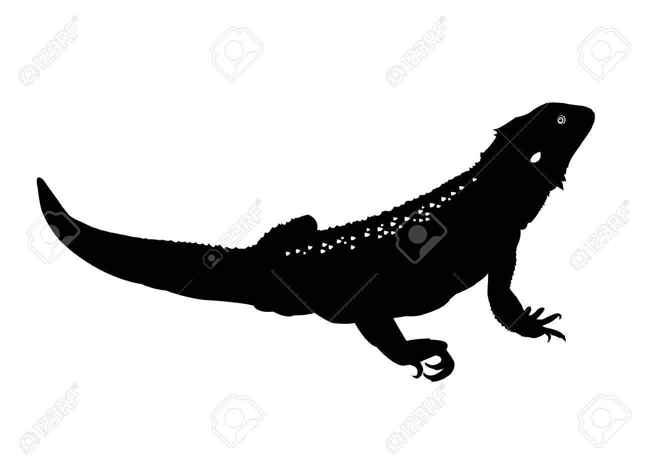Black and white illustration of a bearded dragon or beardie Stock Vector -  32722968