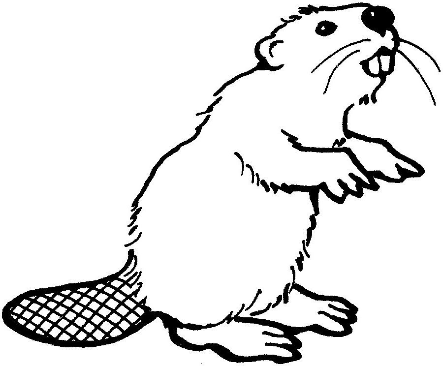 Beaver Clip Art. Beaver cliparts