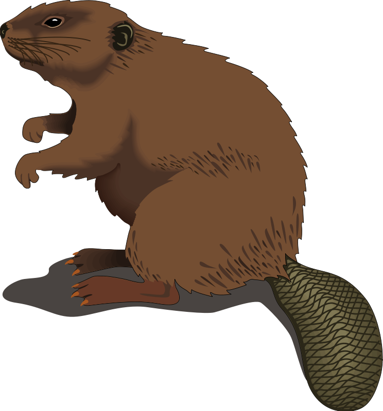 Beaver Clip Art Royalty Free Animal Images Animal Clipart Org