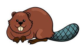 Beaver isolated on white Royalty Free Stock Photos