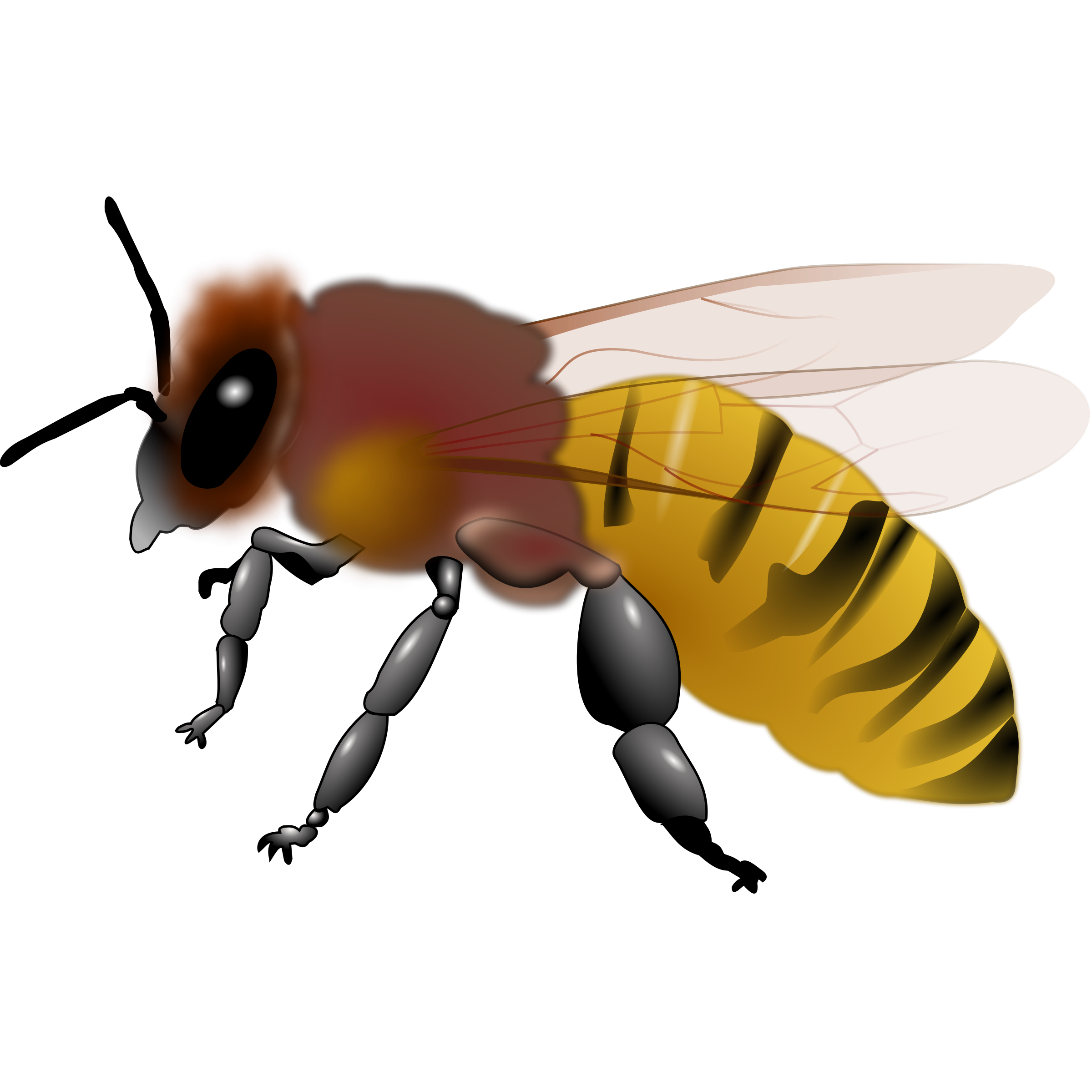 Bee Clipart : Honeybee