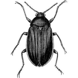 Beetle clipart: Beetle Clipart