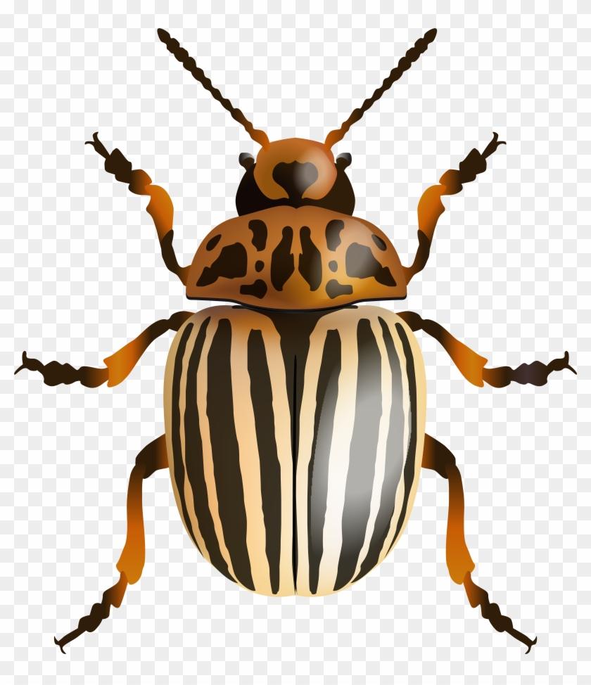 Beetle Png Clip Art Image - Beetle Png Clip Art Image