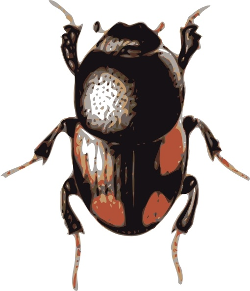 Insect Beetle clip art