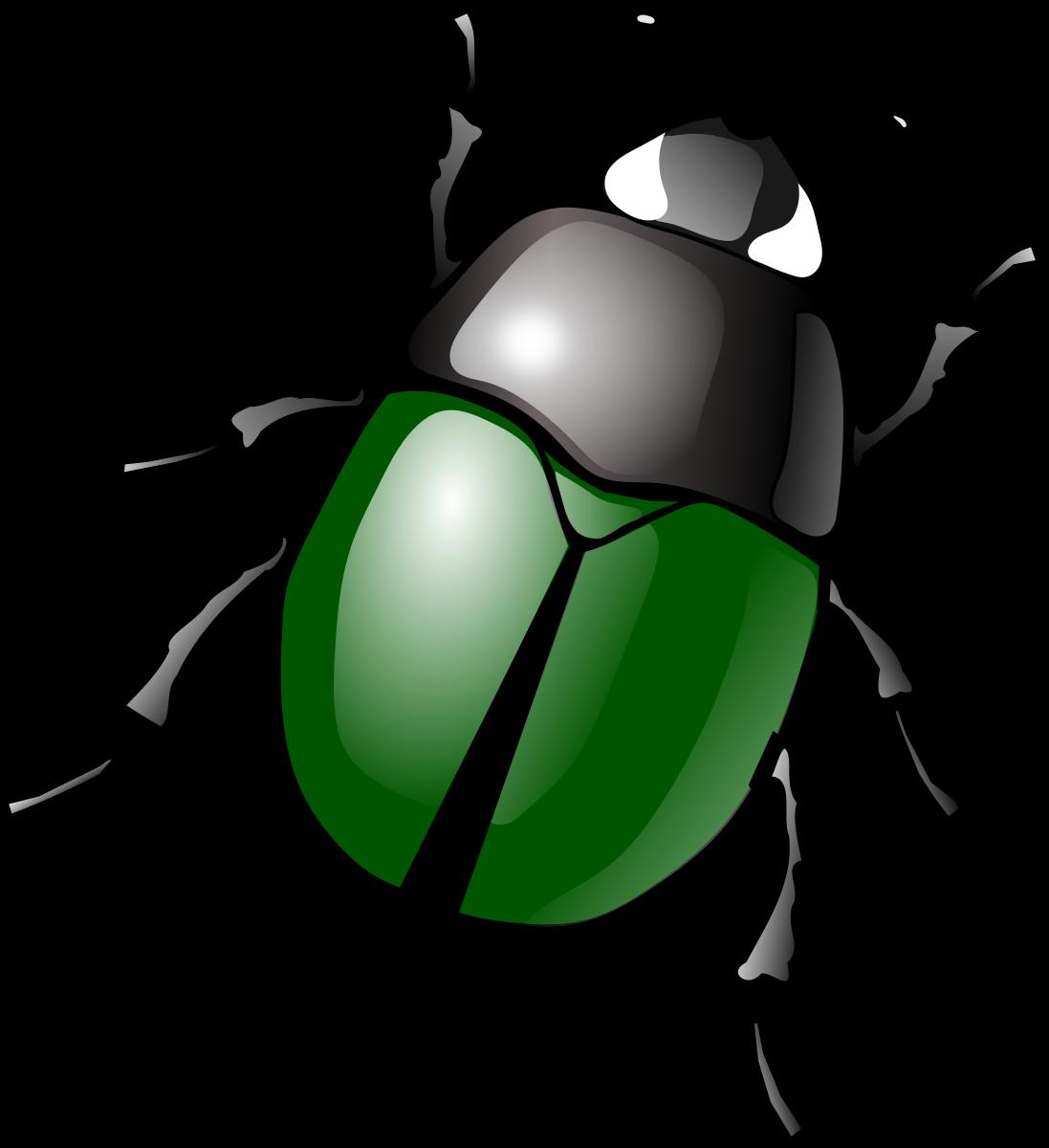 Beetle Clipart-Clipartlook.com-1097
