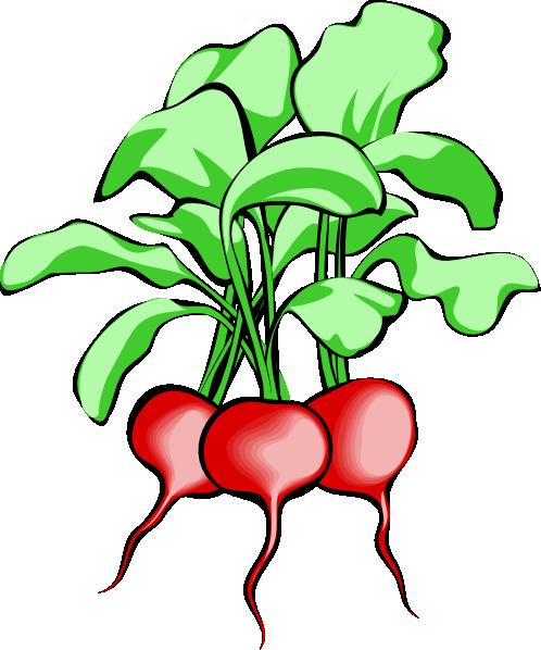 Beets clip art - vector clip art online, royalty free public domain