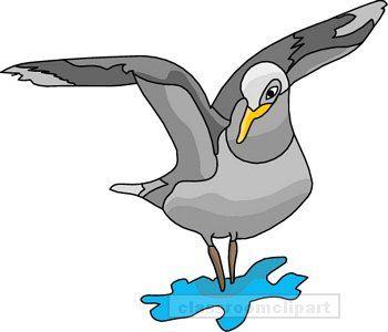 Birds seagull clipart