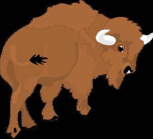 Bison. »
