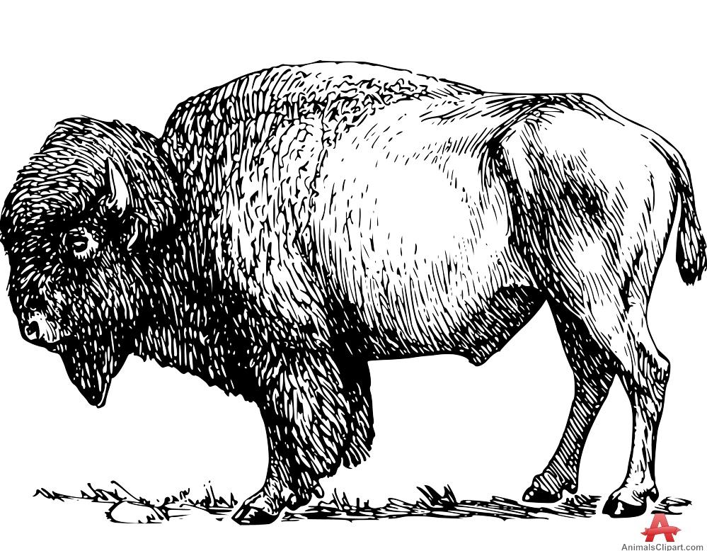 Bison Stencl Clipart