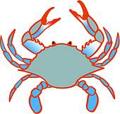 blue crab white background; blue claw crab