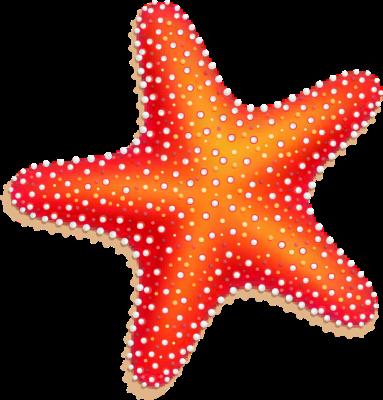 starfish clipart