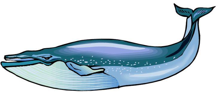 Blue whale clip art blue whale .