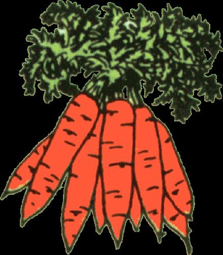 Bucket of Carrots Clip Art