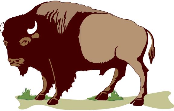 Buffalo Clipart-Clipartlook.com-576